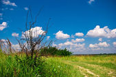 Landscape sunny summer day — Stock Photo