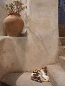 Adorable chat qui dort sur les marches près d'un pot de fleur — Photo