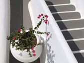 Jar with bougainvillea on white and gray stairs — Stock Photo