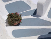 Vase of red flowers on white and gray steps — Stock Photo