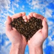 Coffee fragrant heart — Foto Stock #9382862