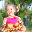 Harvest of apples — Stock Photo