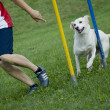 Dog jumps in the race — Stock Photo