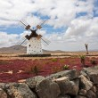 Windmill on Canary Island Fuerteventura — Stock Photo