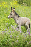 Grey little donkey — Stock fotografie