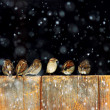 Sparrows in the snow - Stock Photo