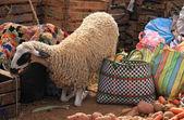 De schapen — Stockfoto
