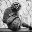 The monkey — Foto Stock