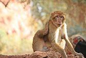 The monkey — Stock Photo