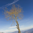 Stock Photo: Tree in a winter landscape