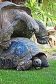 Gigantyczne żółwie — Zdjęcie stockowe
