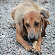 Dog with bone - Photo
