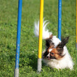Royalty-Free Stock Photo: Dog in the race