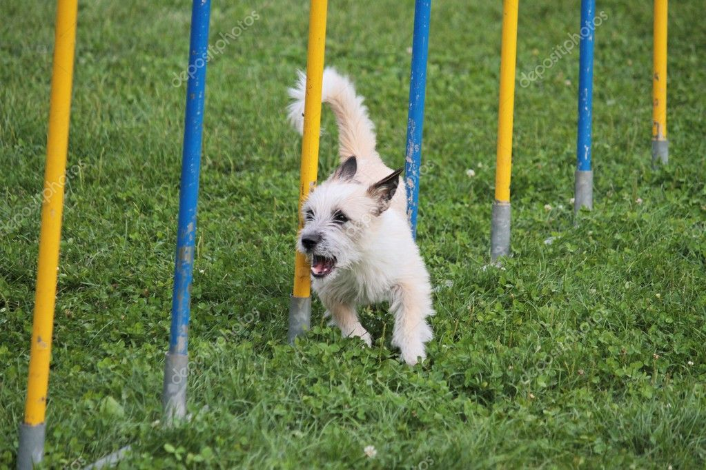 Dog jumps in the race — Stock Photo #9772038