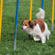 Royalty-Free Stock Photo: Dog jumps in the race
