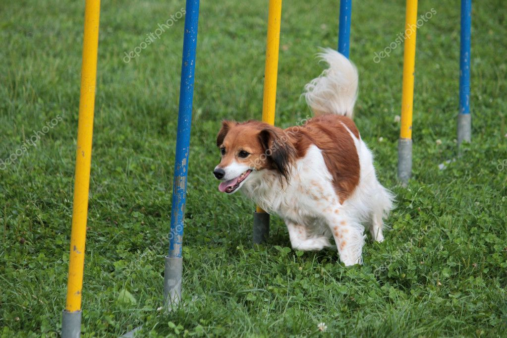 Dog in the race — Stock Photo #9824727