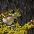 Stock Photo: Tree Frog