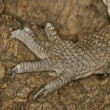 Monitor Lizard — Stock Photo #9184335