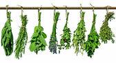 Herbs on line — Stock Photo