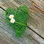 Heart of grass — Stock Photo