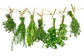 Herbs on line — Stock Photo