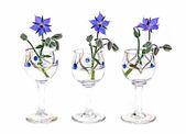Borage flowers — Stock Photo