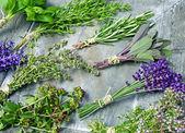 Various herbs — Stock Photo