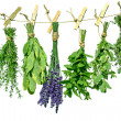 Various herbs - Stock Photo