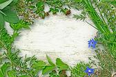 Frame of herbs — Stock Photo