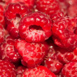 Selection of freshly picked ripe red raspberries — Stock Photo