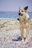 Perro en la playa — Foto de Stock