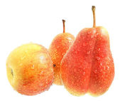 Wet apple and two wet pear. — Stock Photo