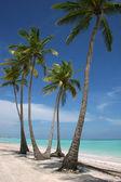 White Sand Paradise Beach — Stock Photo