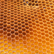 Close up view of the bees on honey — Stock Photo #9340596