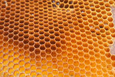 Close up view of the bees on honey — Stock Photo