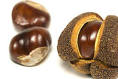Autumn conkers Horse chestnuts — Stock Photo