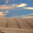Stock Photo: Crops under dramatic sky