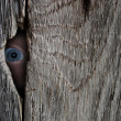 Stock Photo: Eye spy