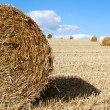 Close photo of a hay bail — Stock Photo
