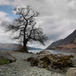 Tree at lake edge, Cumbria, England — Stock Photo