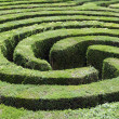 Maze made from a hedge — Stock Photo