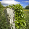 Distressed post in a field — Stock Photo