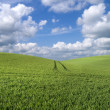 Rolling hill landscape — Stock Photo