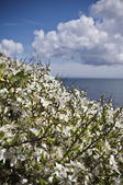 Blossoming flowers on a coastal path — Stock Photo