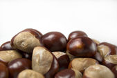Group of conkers — Stock Photo