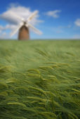 Crops and windmill — Stock Photo