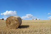 Hay bails — Stock Photo