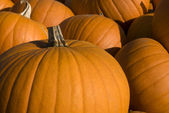 Group of halloween pumpkins — Stock Photo