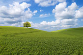 Tree on the hill — Stock Photo