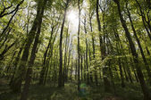 Sunlit forest — Stock Photo